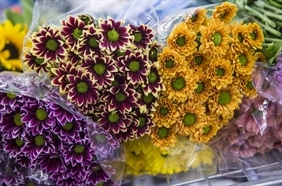 Halottak napja, mindenszentek: így adózik, aki virágot árul