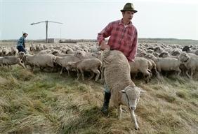 Könnyített szabályok a fiatal gazdák induló támogatásának megítéléséhez